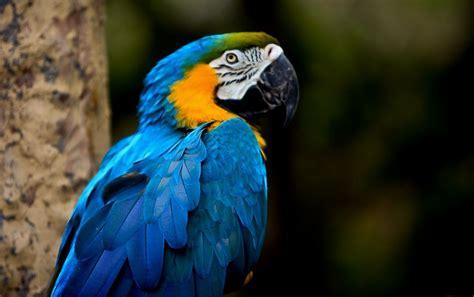 Tropical birds | Beautiful Birds | Pinterest | Bird and ...