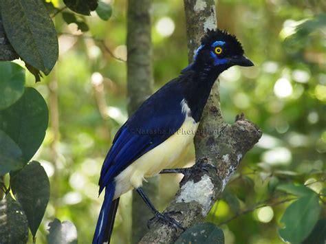 Tropical Birds Names