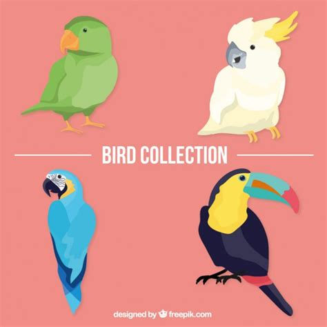 Tropical birds pack Vector | Free Download