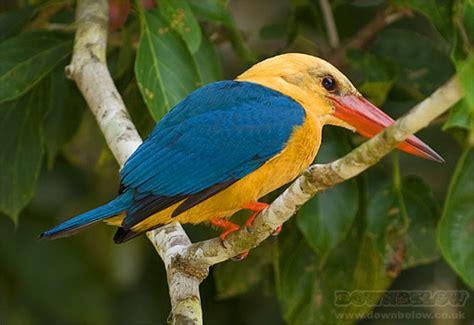 Tropical Birds Photo Collection | Diving Sabah? Dive ...