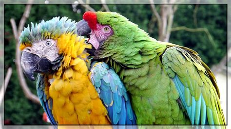 TROPICAL BIRDS Singing/Chirping, Exotic Birds Sounds, 1 ...