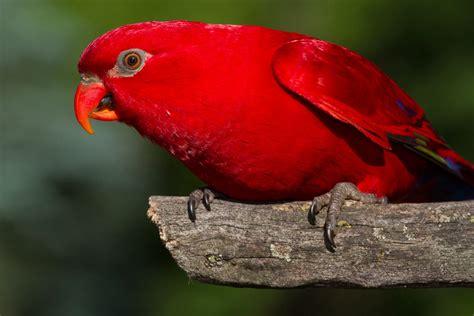 Tropical Birds | Wings of Love