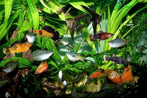 Tropical Fish Aquarium Fish   Ichthyologist Thomas R ...