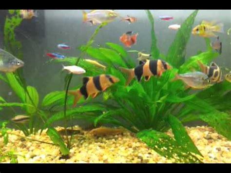 Tropical Freshwater Aquarium / Acuario  pecera  de Peces ...