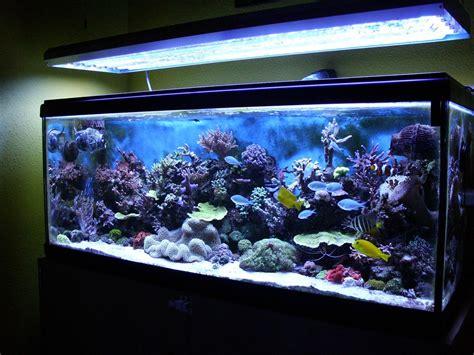 Tropical Freshwater Aquarium Fish Compatibility   Aquarium ...