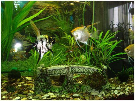 Tropical Freshwater Aquarium Fish List | Aquarium Design Ideas