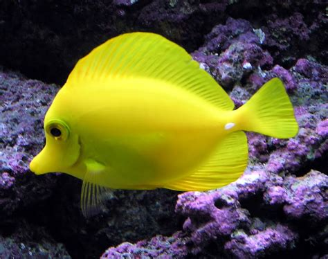 Tropical freshwater aquarium fish pictures   Just for Sharing