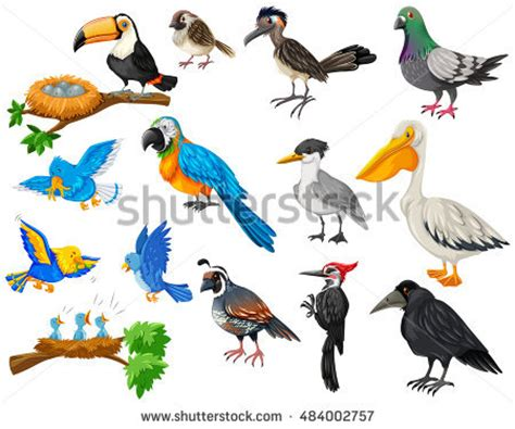 Tropical Parrot Set Colored Feathers Wings Stock Vector ...