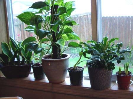 Trucos para cultivar plantas de interior con éxito Plantas ...