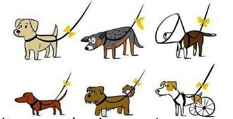 ¿Tu perro necesita espacio? Avísalo con un lazo amarillo ...