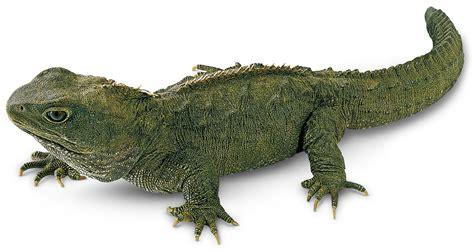 Tuatara Lizards | Tuatara Third Eye | DK Find Out