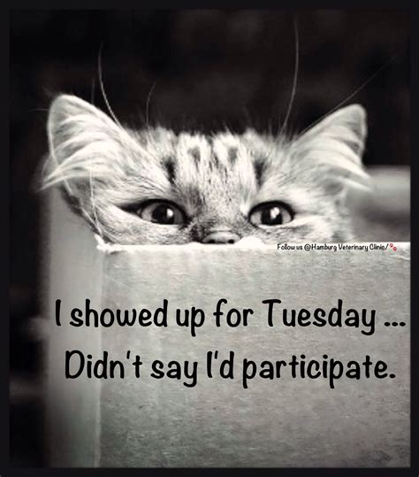 Tuesday humor | Animal funny | Cat humor | Cute cats ...