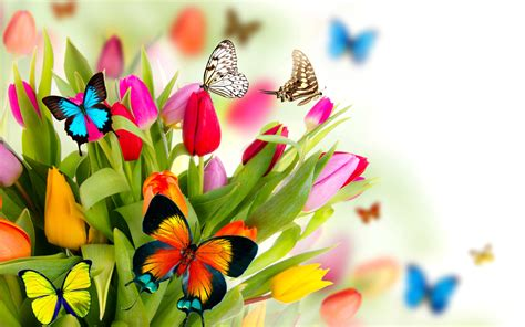 Tulips and Butterflies Full HD Fond d écran and Arrière ...