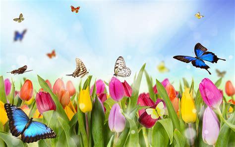 Tulips and Butterflies Full HD Fondo de Pantalla and Fondo ...