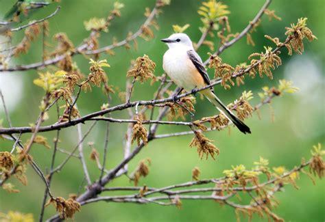 Tulsa Bird | Tulsa Bird | Phan Ly | Flickr