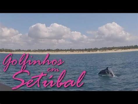 Turismo em Portugal: Golfinhos em Setúbal!   YouTube