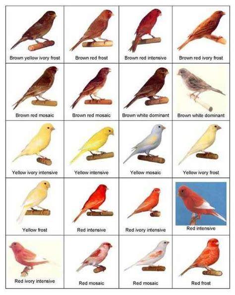 types of birds - general information