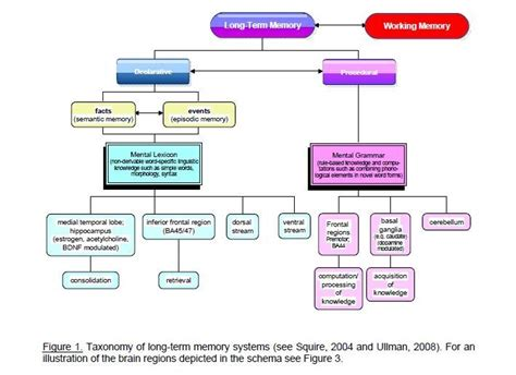 types of human memory - Google Search | Learning and ...