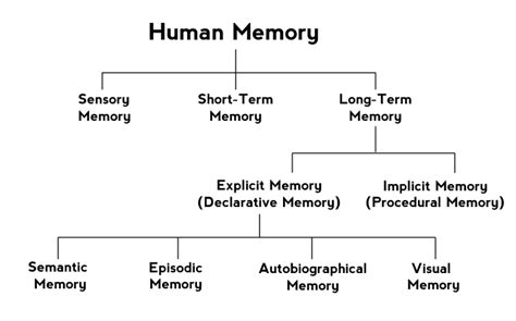 Types of Memory - Psychestudy