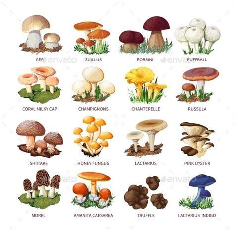 Types Of Mushrooms Chart | www.pixshark.com   Images ...
