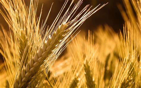 U.S. grain markets turn higher on weather | Agrodaily