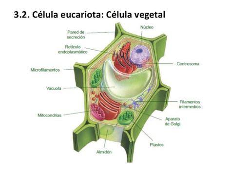 Ud 6 la célula