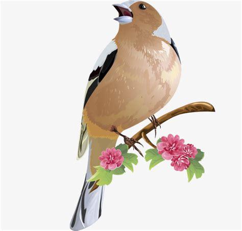Um Pássaro A Cantar Ramos Flores OS Pássaros PNG Imagem ...