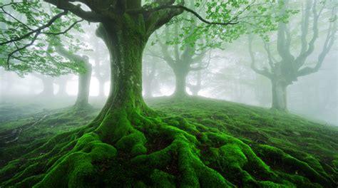 Un bosque encantado en el corazón del País Vasco | Foto ...