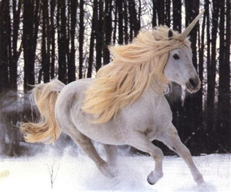 un gran fenomeno: Historia del Unicornio