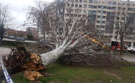 Un joven, herido en Valladolid por un árbol derribado por ...