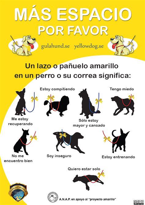 Un lazo amarillo en el collar de un perro ¿qué significa ...