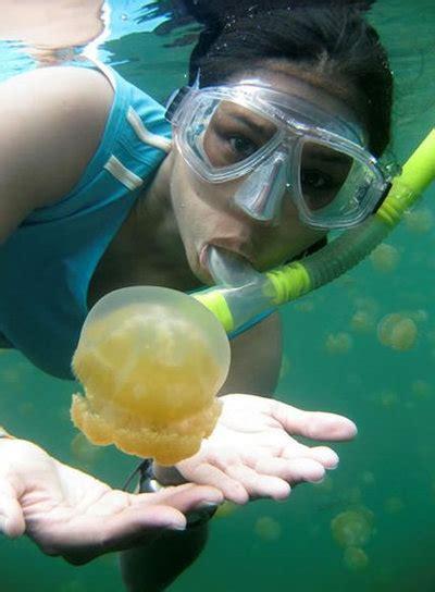 Un lugar en el Pacífico en el que las medusas no pican ...