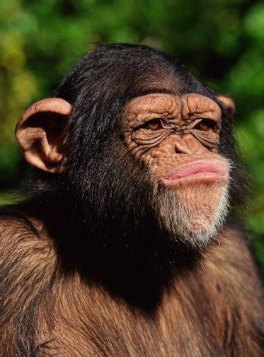 Un mundo muy curioso: Descripción de un mono