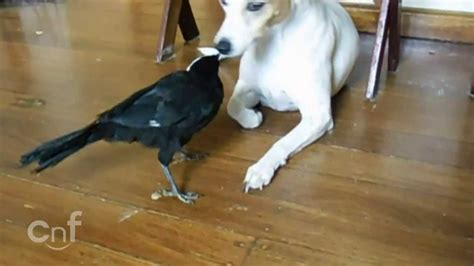 Un pájaro dándole de comer al gato y al perro - YouTube