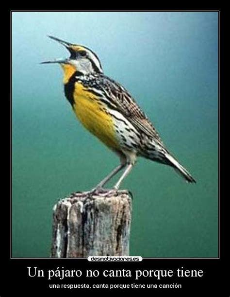 Un pájaro no canta porque tiene | Desmotivaciones