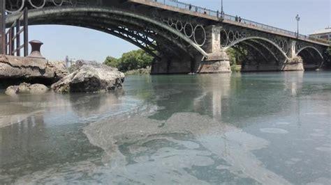 Un vertido de aceite cubre la dársena del río Guadalquivir ...