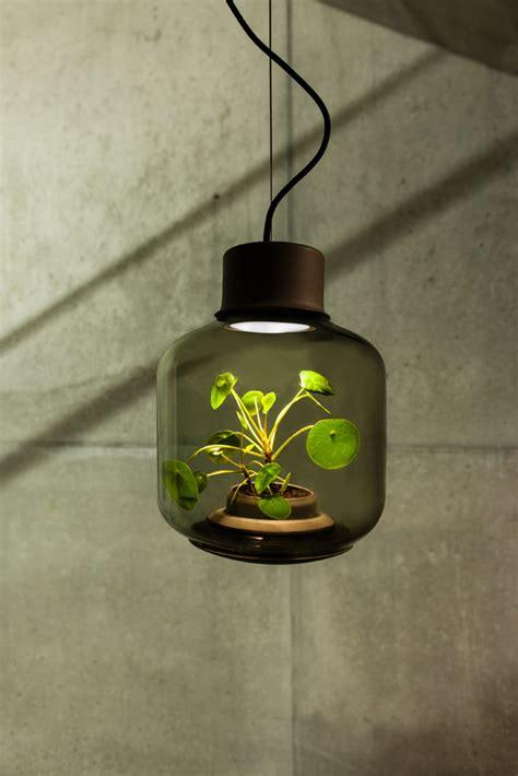 Una planta puede crecer sin luz ni agua   diariodesign.com