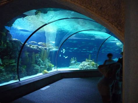 Underwater Dome at the Seattle Aquarium : pics