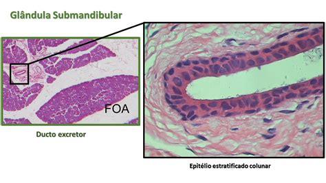 UNESP: Câmpus de Araçatuba   Faculdade de Odontologia
