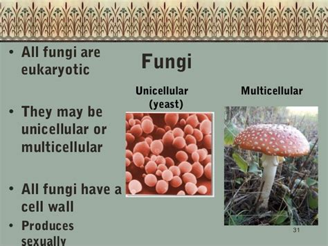 Unicellular Fungi Are Called