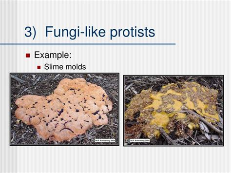 Unicellular Fungi Examples