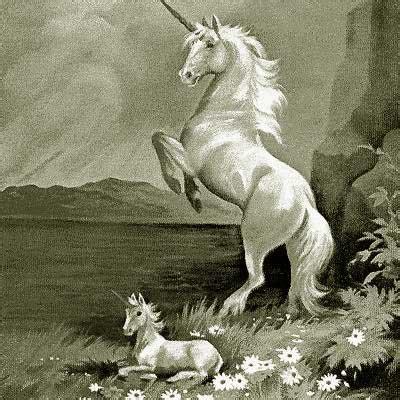 Unicornios   Taringa!