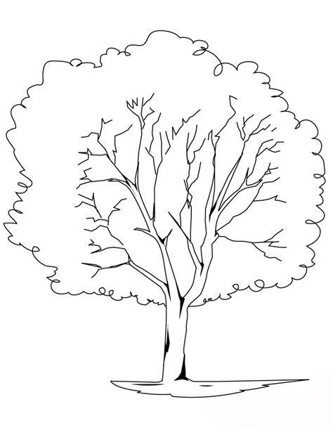 universul copiilor: Planse de colorat copaci