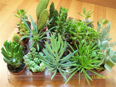 Unos cuantos Cactus y otro tipo de plantas