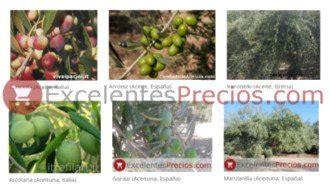 Variedades de Olivo y Cerezo  características, plagas ...