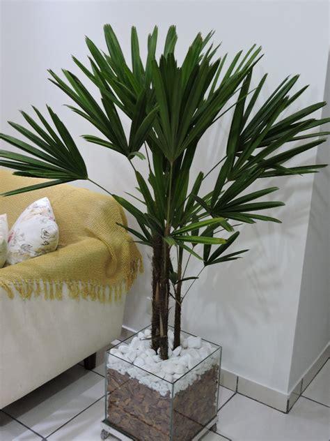 Vaso De Planta Ornamental, Palmeira Ráfia Em Cachepot 40 ...