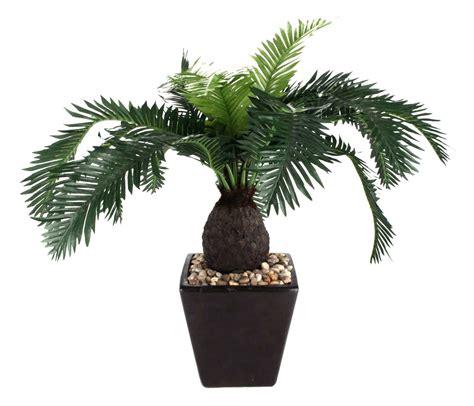 Vaso preto de plantas | Plantas Ornamentais