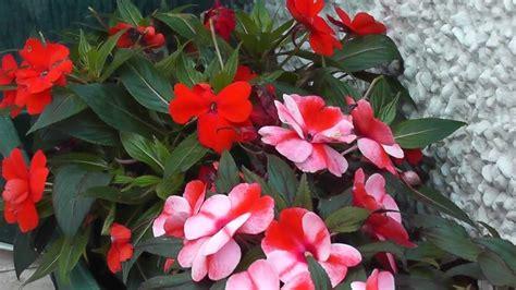 vasos de flores  Maravilhas     YouTube