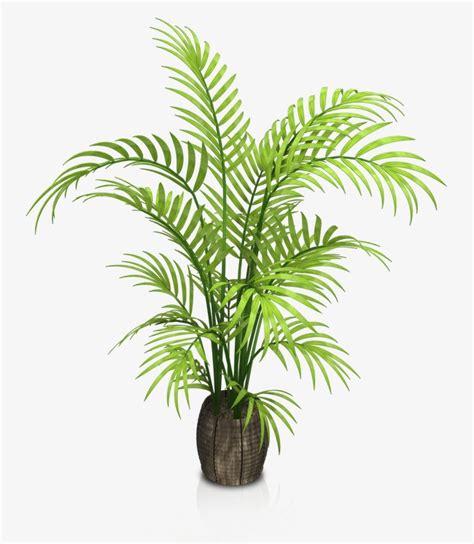 Vasos De Plantas De Interior Flores A Grama Plantas PNG ...