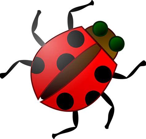 Vector gratis: Insectos, Escarabajo, Insecto, Rojo ...